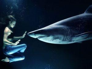 nager avec les requins part2